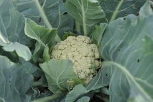 Комплекс удобрений поможет вырастить желанный урожай