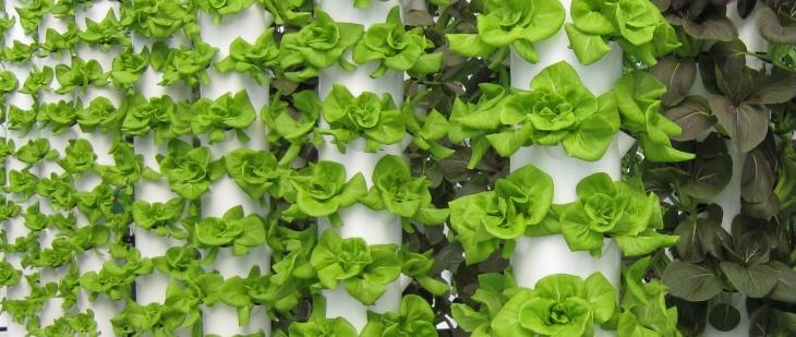 Зелень на гидропонике