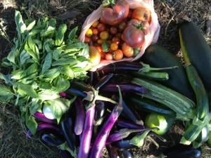 Урожай садовода благодаря календарю работ