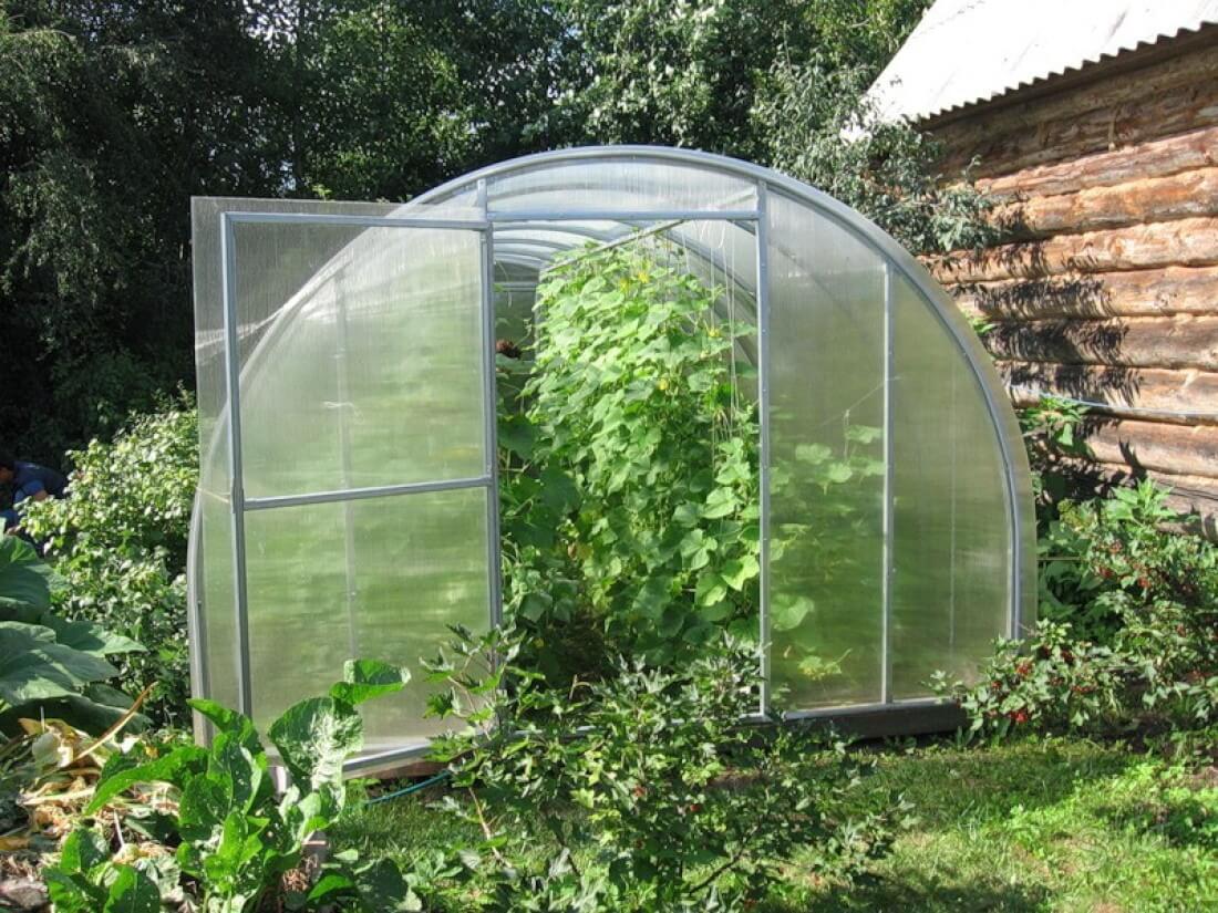 Как посадить огурцы в теплице для получения урожая круглый год