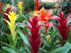 Прекрасное растение для сада