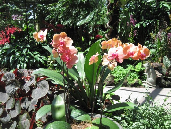 Орхидея в открытом грунте