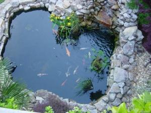 Дачный водоем с рыбками