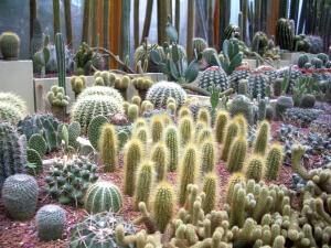 Виды домашних кактусов: самые популярные и малоизвестные растения