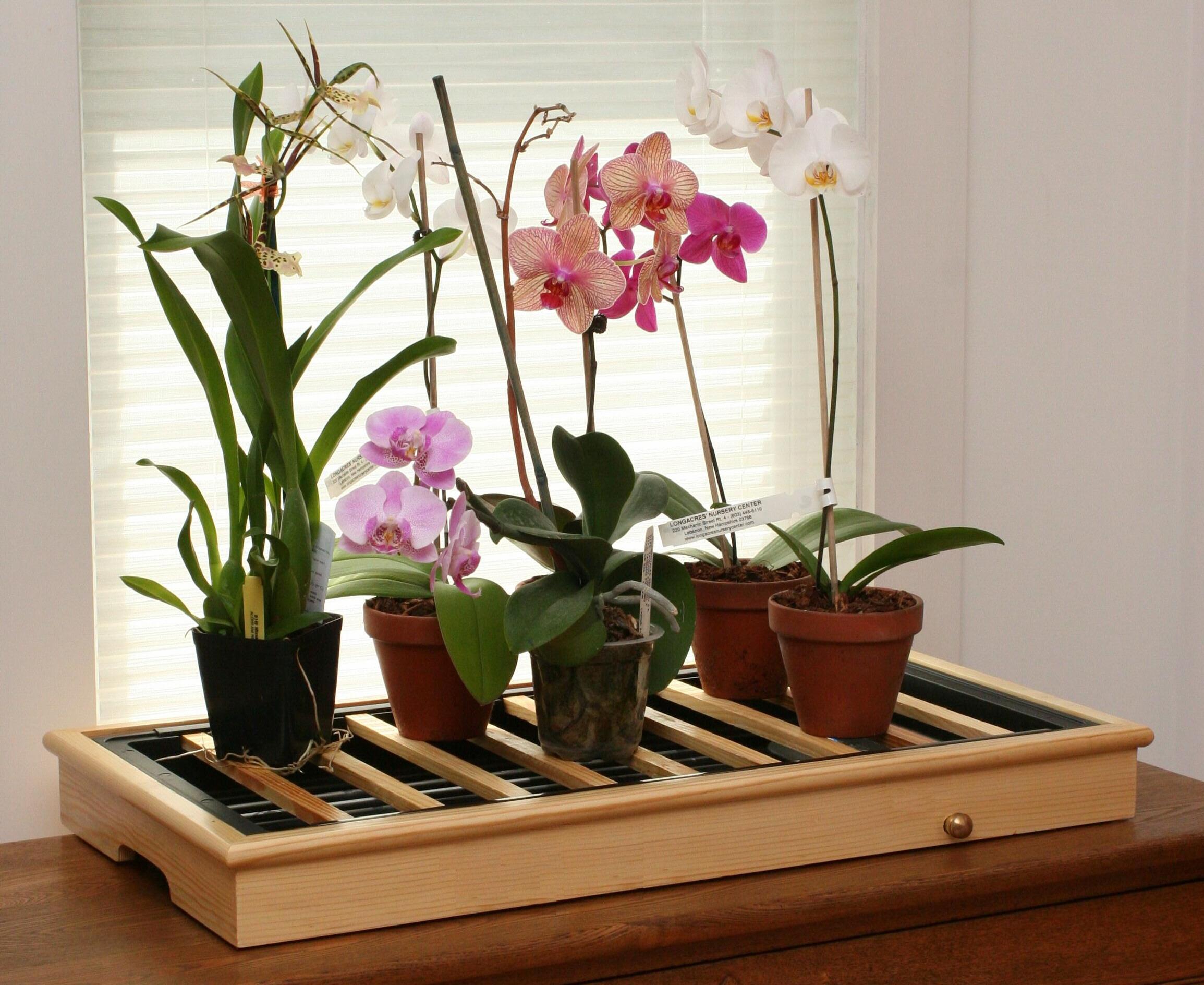 Орхидеи — особенности растений, как размножить в домашних условиях