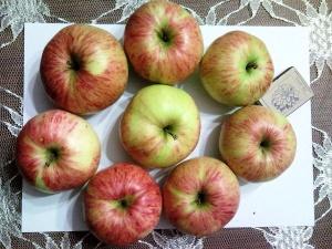Собранный урожай яблок