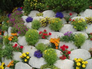 Необычная посадка цветов