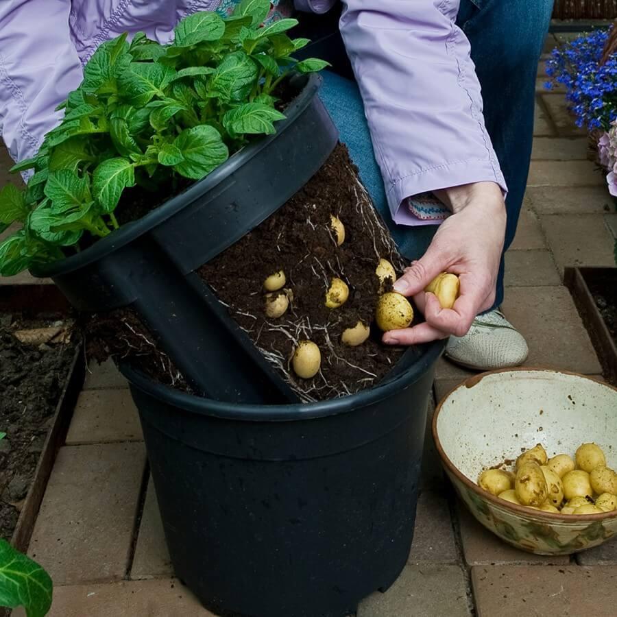 Самые лучшие методы выращивания большого урожая