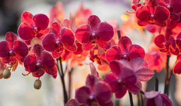 Орхидея, обработанная от белокрылки