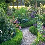 Аквилегия: выращивание из семян и все секреты по уходу
