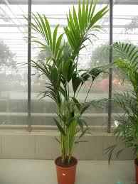 Рост пальмы после подкормки