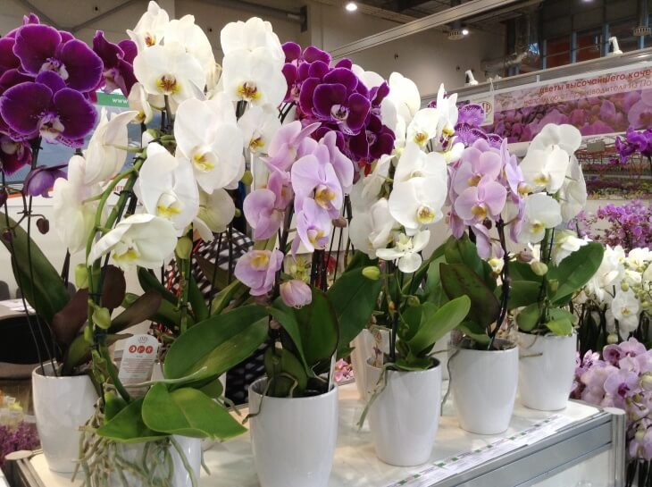 Обработанные от вредителей орхидеи