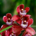 Почему у орхидеи пожелтели листья: поиск причин и устранение нарушений