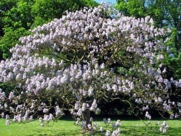 Дерево, выращенное из саженца