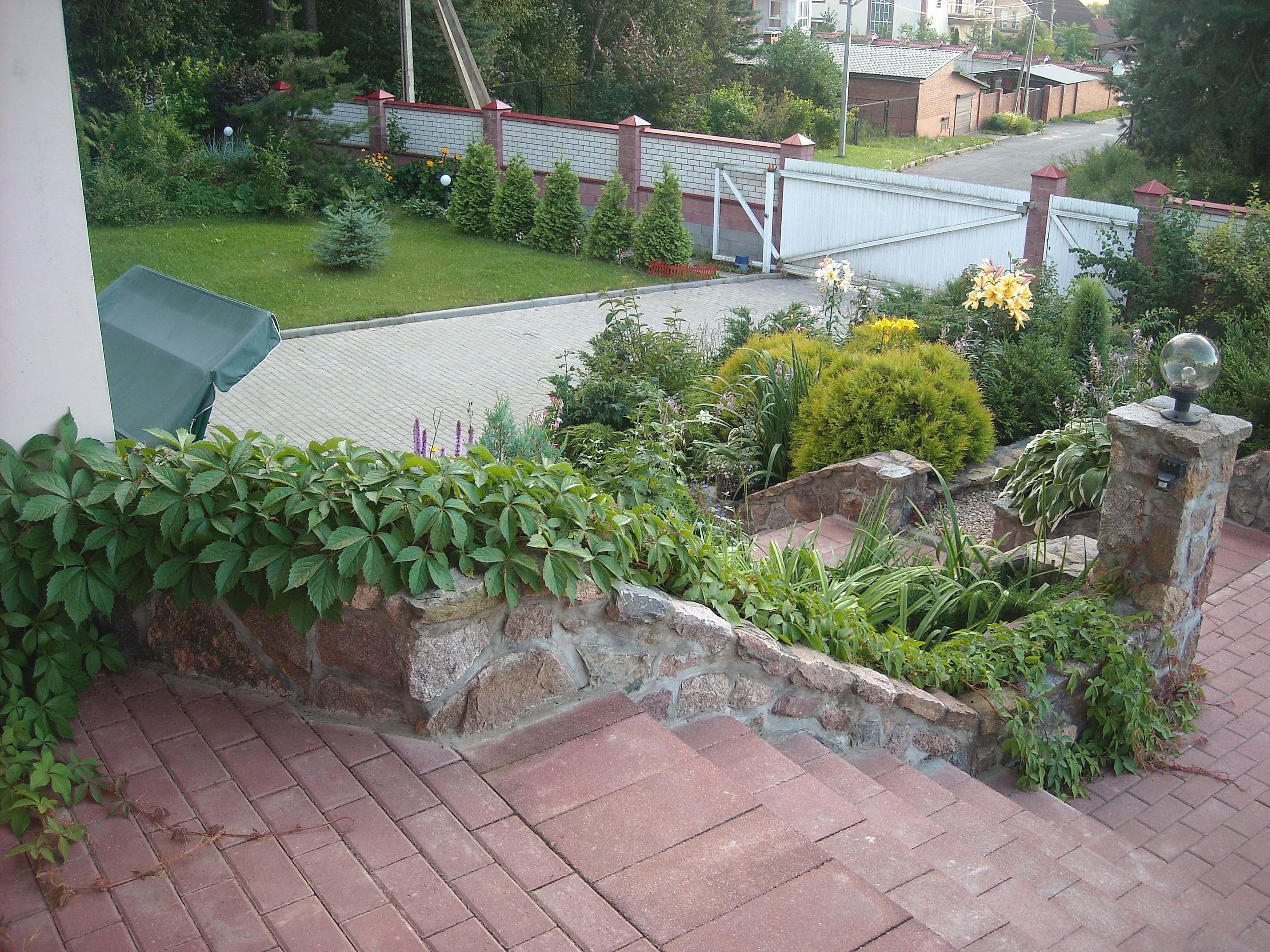 Как выбрать стелющийся кустарник: разновидности, особенности и достоинства