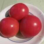 Выращивание томата Бычий лоб через рассаду, формирование и общие правила ухода