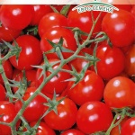 Томат Вишня зимняя: описание сорта и технология выращивания