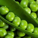 Выращивание гороха в домашних условиях: сорта, способы, описание