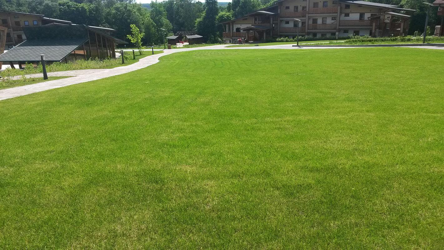 Газонная трава: как выбрать, как правильно сажать