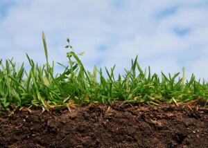 Повышение плодородия почвы методом беспахотного земледелия
