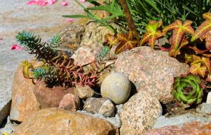 Рокарий с почвопокровными растениями