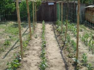 Организованная поддержка для малины в саду