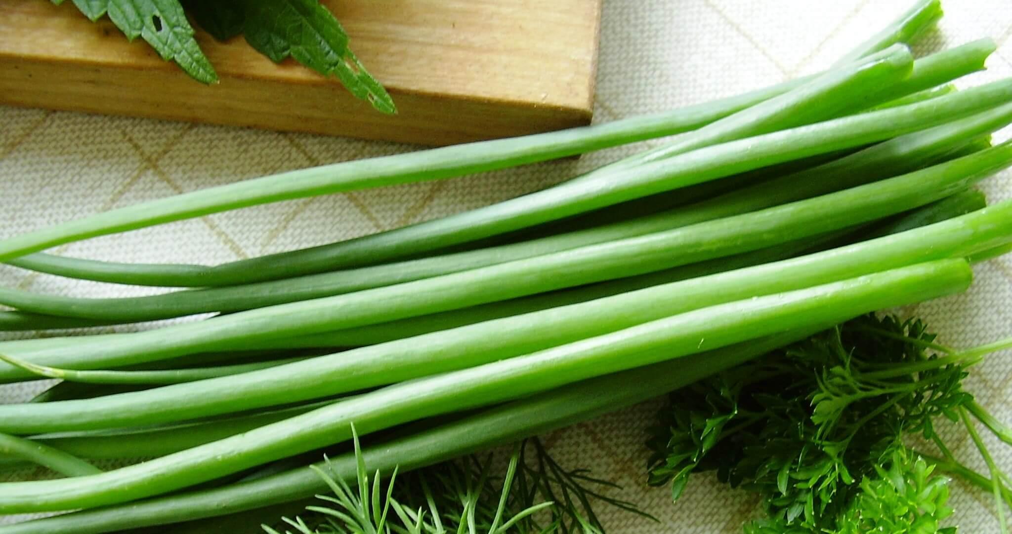 Как вырастить зеленый лук в домашних условиях: все ответы от посадки до сбора урожая