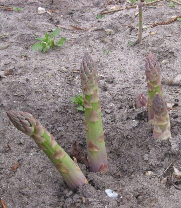 Урожай после удобрения