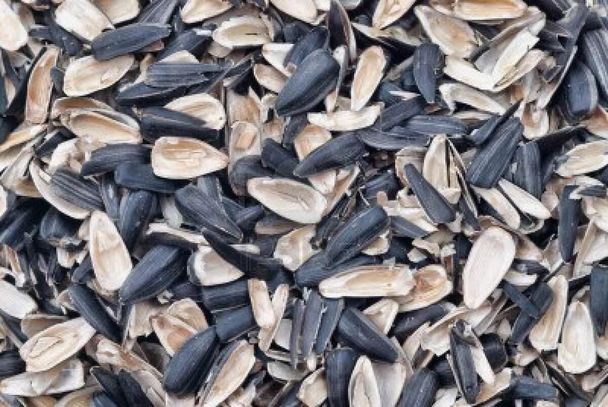 Шелуха от семечек, как универсальное средство на садовом участке