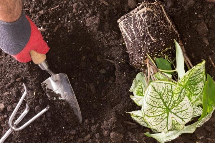 Пересадка комнатного растения