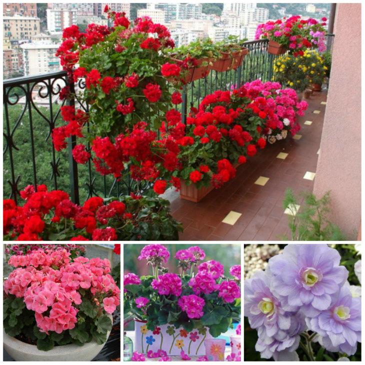 Украшение балкона геранью