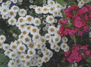 Отличные цветы для букета