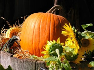 Гигантская тыква титан: основные характеристики сорта