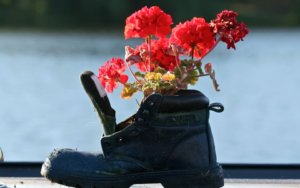 Герань или пеларгония: секреты правильной обрезки и подкормки для пышного цветения