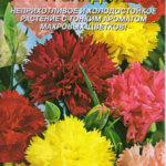 Гвоздика Гренадин: особенности размножения, выращивания и ухода