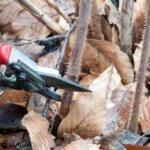 Как правильно и в какой последовательности производится обрезка малины на зиму