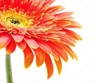 Пышное цветение прекрасного цветка