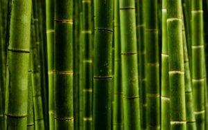 Как пересадить бамбук правильно: основные правила пересадки