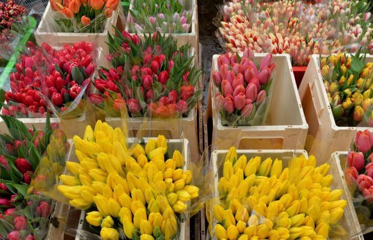 Тюльпаны, которые готовы к продаже