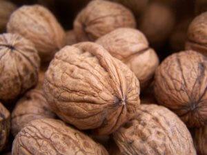 Прививка ореха грецкого: как сделать правильно и что для этого нужно