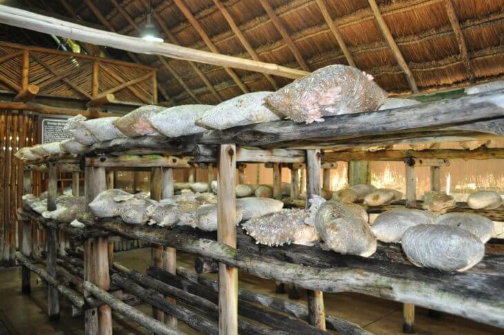 Погреб для выращивания грибов 98