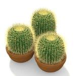 Как правильно поливать кактус: уход за растением