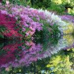 Астильба белая: рекомендации по делению и высеву семян, уход в домашних условиях