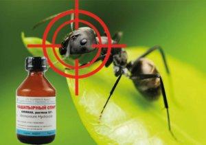 Первая помощь при муравьях - нашатырь
