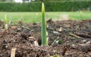 При правильной кислотности можно вырастить отличный урожай