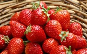Богатый урожай ягод