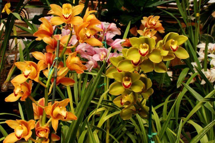 Цветение правильно посаженного растения