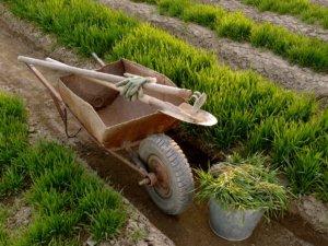 При правильно удобрении можно обзавестись хорошим садом