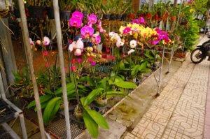 Вьетнамская орхидея: основные характеристики