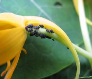 Инсектициды: что это такое и как их применять